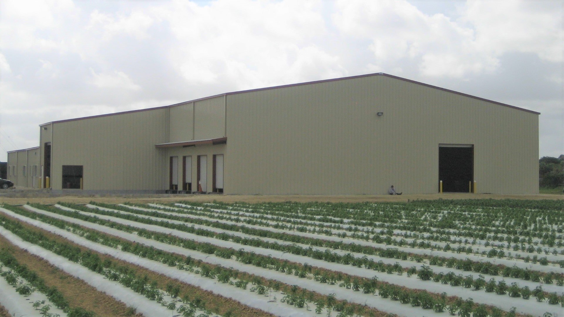 Commercial plant grower packing house tan steel building with loading dock view from right endwall.
